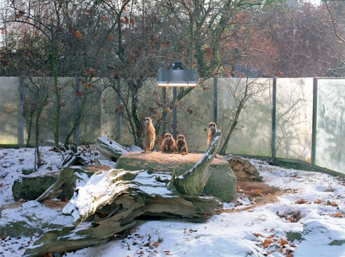 Ignacio Evangelista_Natural Selection_Four Suricates in Stuttgart
